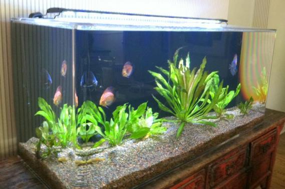 120 Gallon Rounded Corners Custom Aquarium eBay